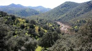 Sierra Morena 1
