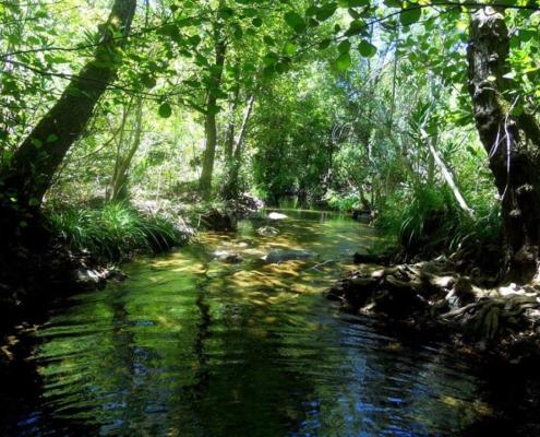 Río Guadalvacarejo